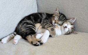 13 Manfaat Memelihara Kucing di Rumah, Banyak Cara untuk Menghilangkan Stres