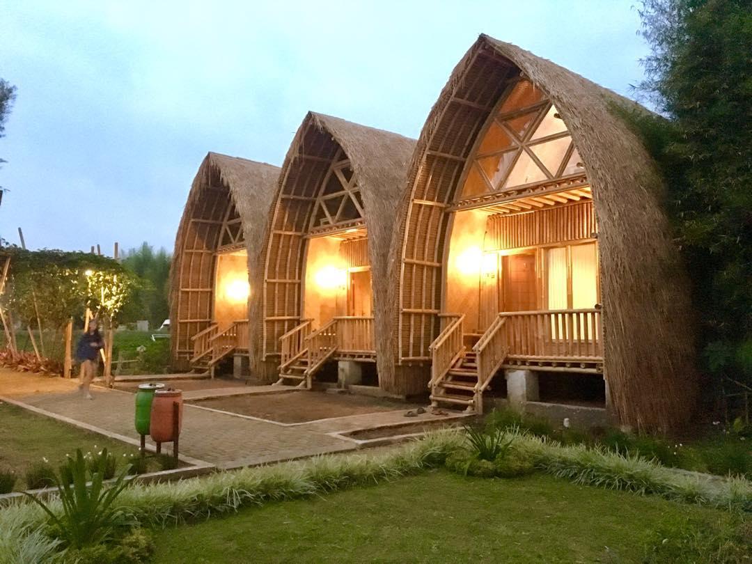 Chava Minerva Bambu