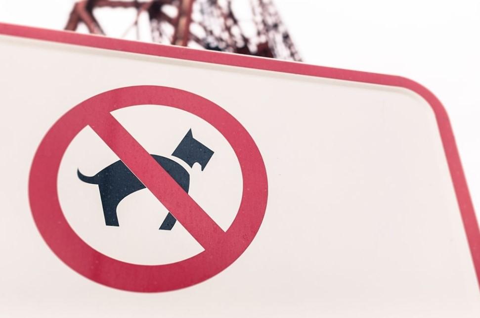 peraturan tinggal di apartemen dilarang membawa hewan