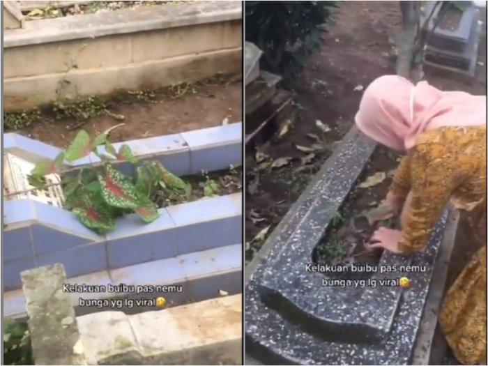 viral-video-emak-emak-yang-ambil-tanaman-hias-di-kuburan50_700
