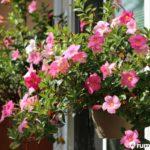7 Jenis Tanaman Rambat yang Bisa Mempercantik Area Taman Rumah