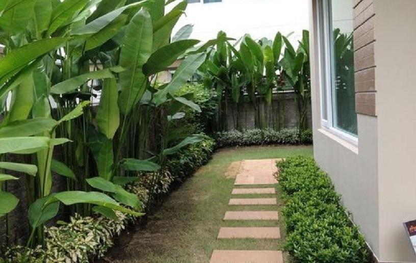 taman halaman rumah