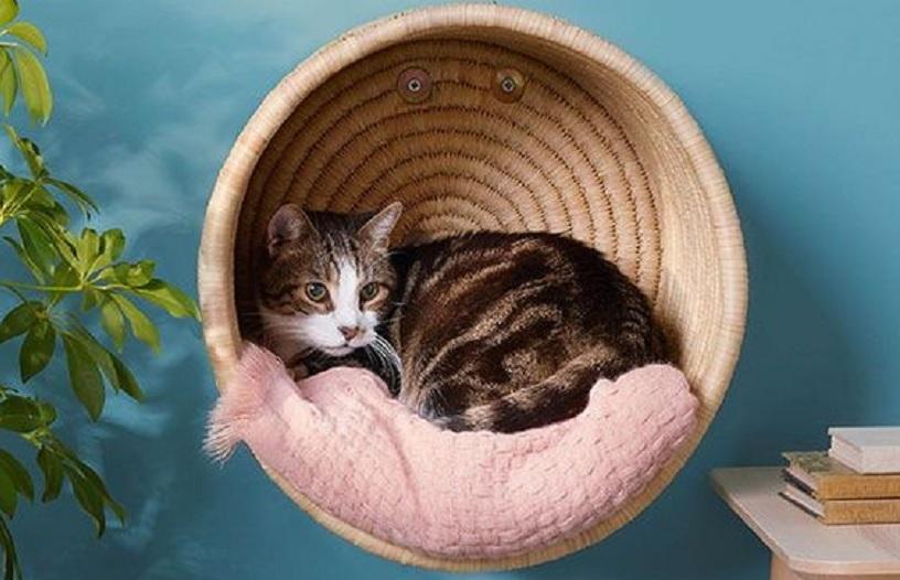 cara membersihkan telinga kucing