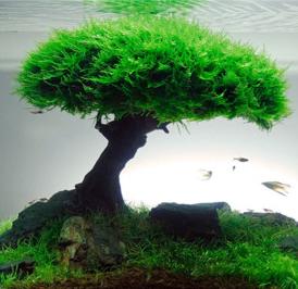 Bonsai aquascape 1
