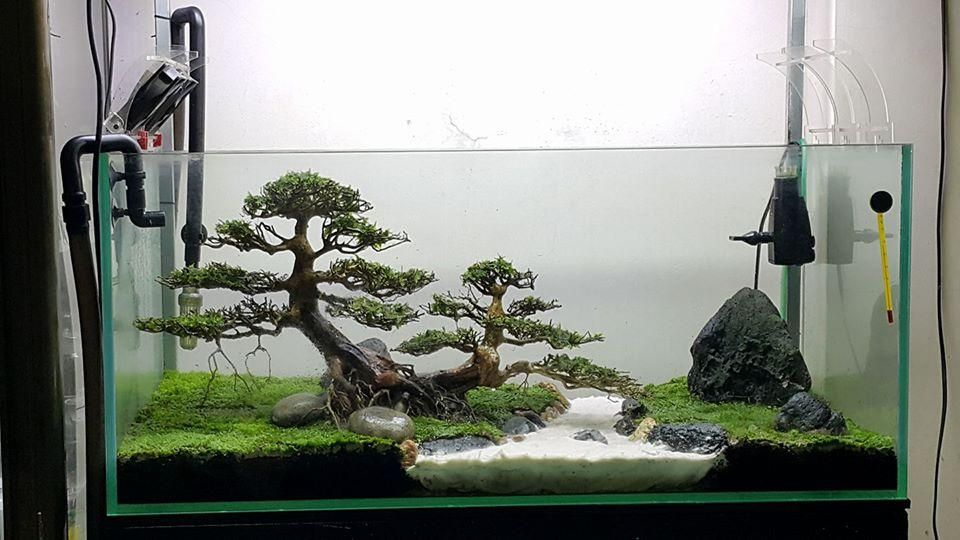 Bonsai aquascape 4