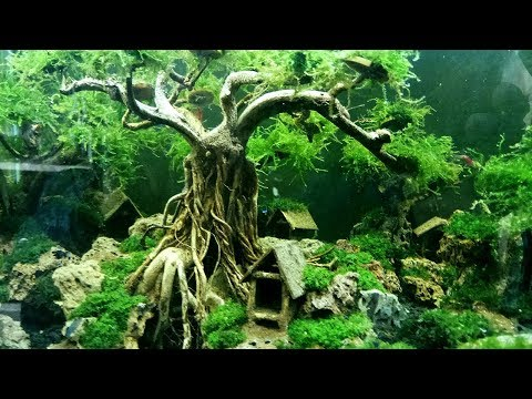 Bonsai aquascape 5
