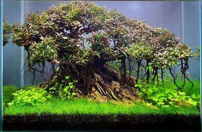 Bonsai aquascape 7