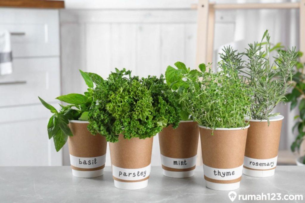 tanaman herbal di rumah
