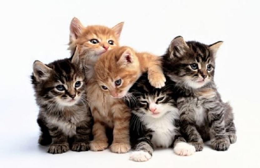 cara menghilang bau kotoran kucing
