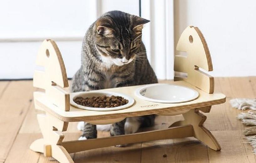 cara menghilangan kutu kucing