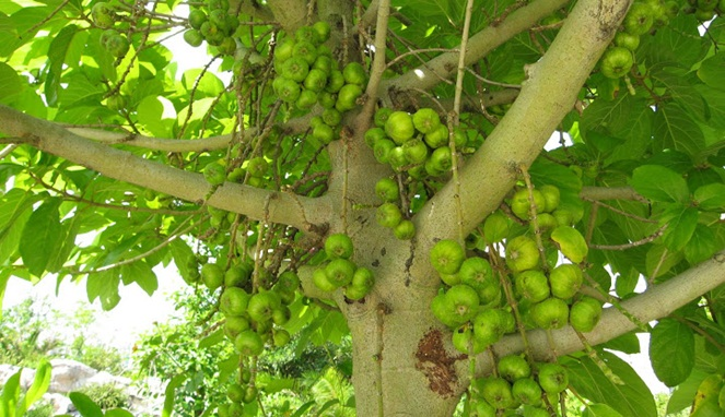 pohon angker 7