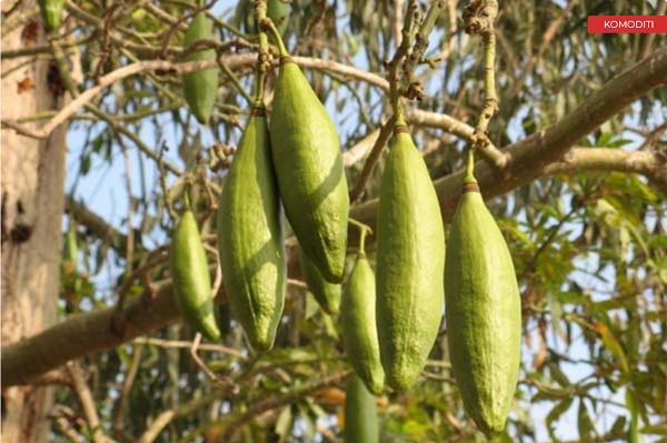 pohon angker 5
