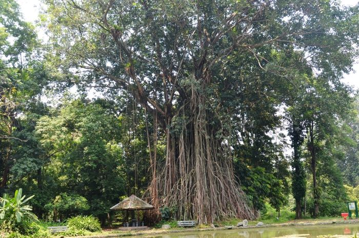 pohon angker 2