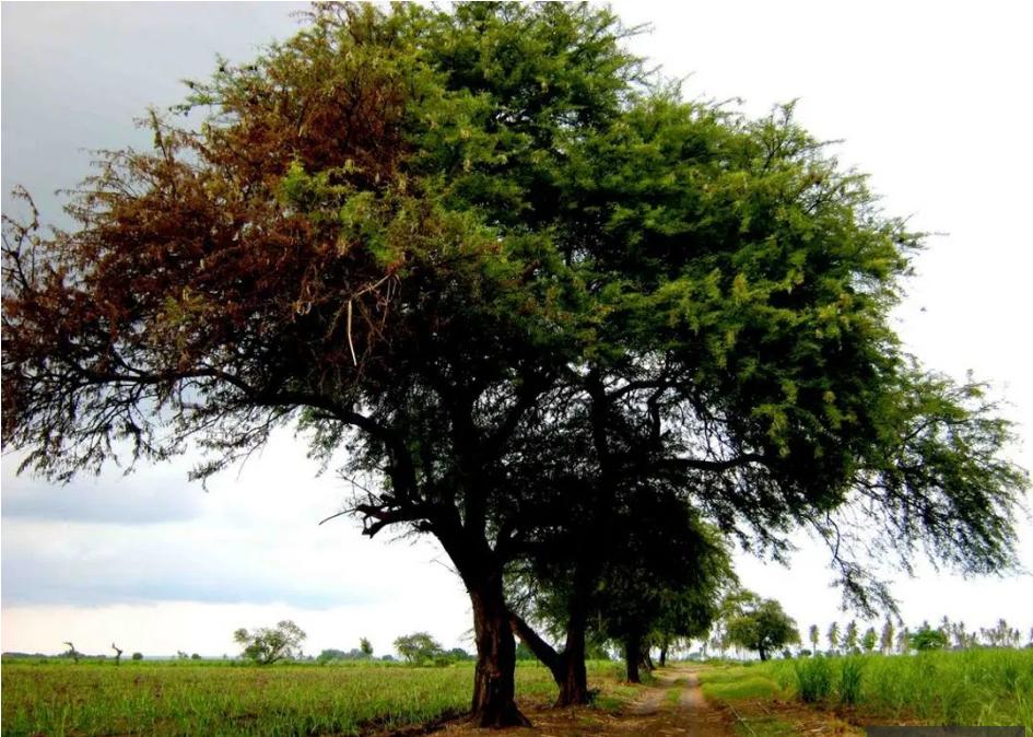 pohon angker 1
