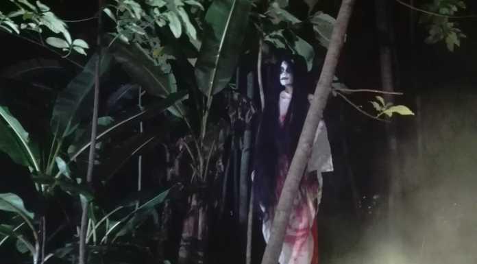 pohon pisang hantu