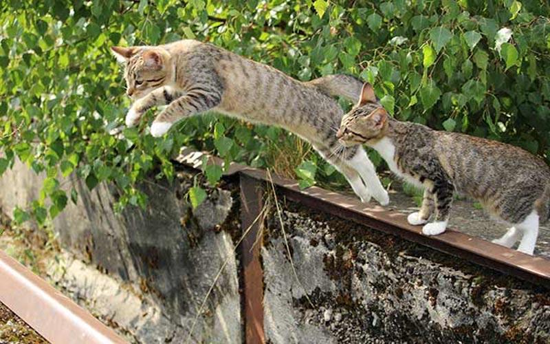 mitos kucing punya 9 nyawa