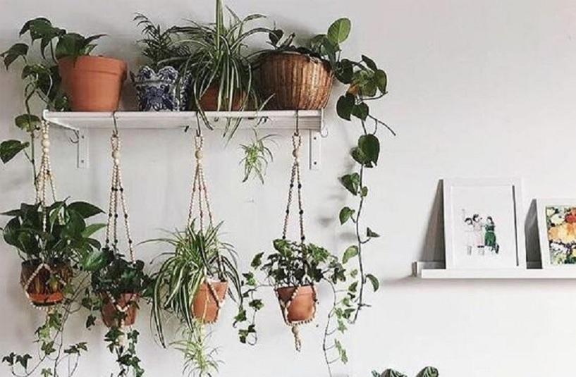 tanaman pot gantung