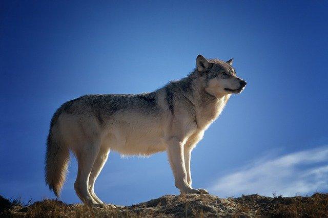 hewan paling setia 3