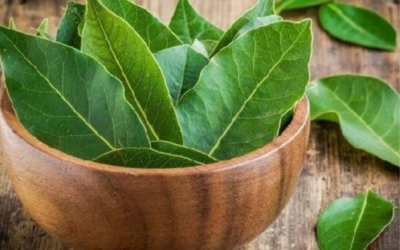 manfaat daun alpukat